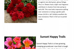 sunset-happy-trails-and-red-ribbons